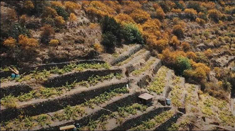 Bancales de La Gomera.