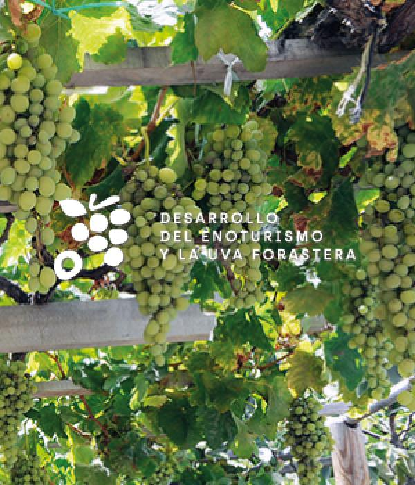 desarrollo del enoturismo y la uva forastera